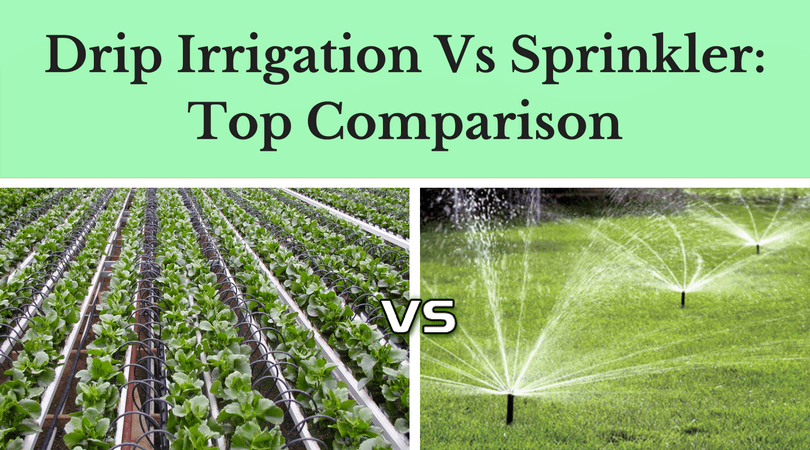 Drip Irrigation Vs Sprinkler- Top Comparison