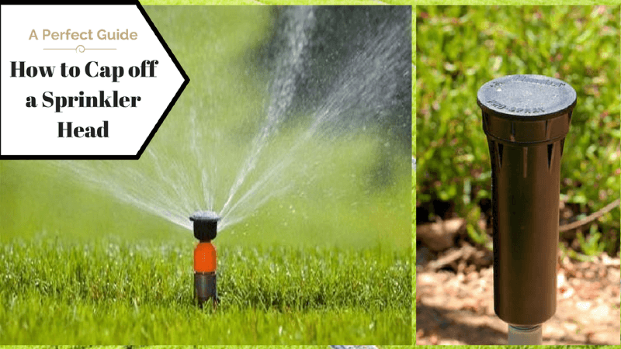 How To Cap Off A Sprinkler Head A Perfect Guide