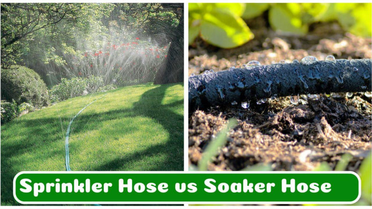 Sprinkler Hose Vs Soaker Which Is