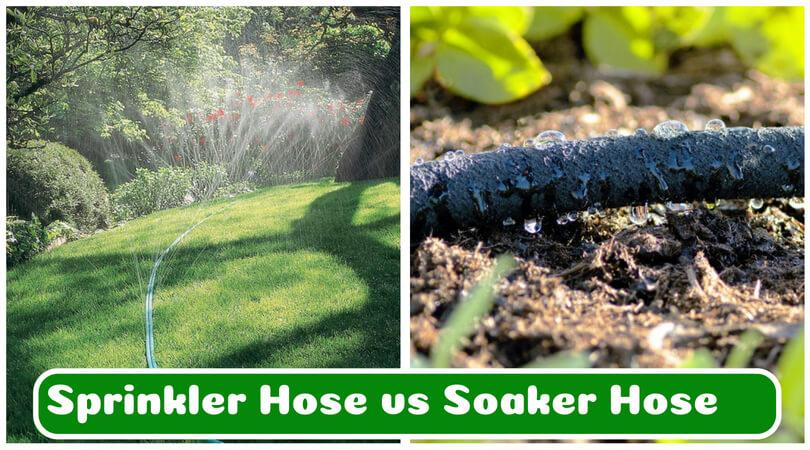 Sprinkler Hose Vs Soaker Which Is A Better System For