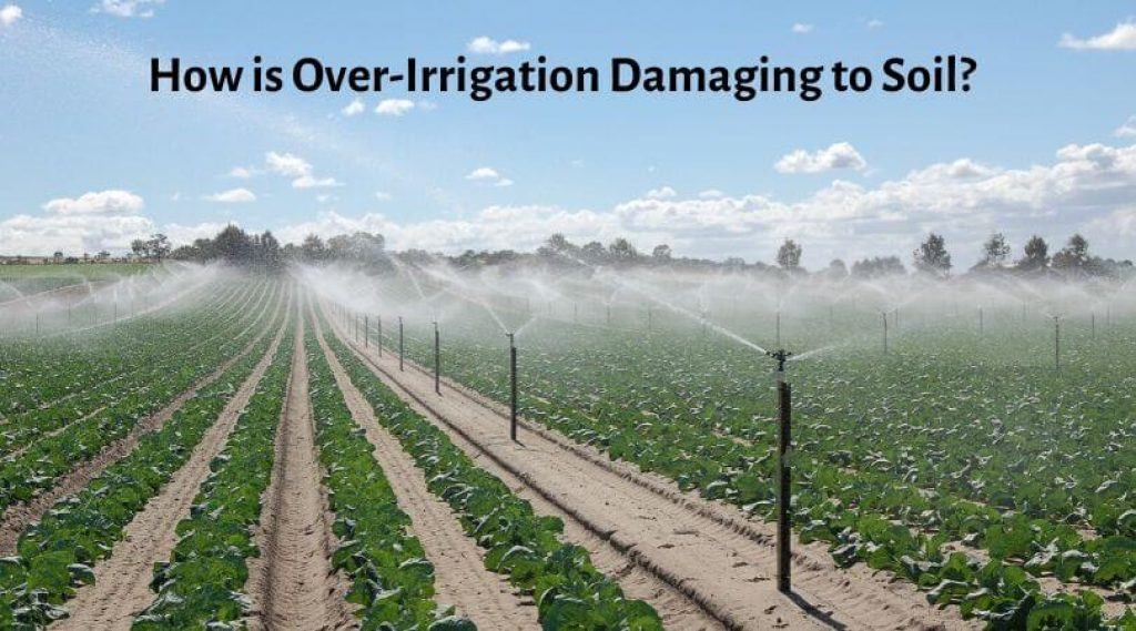 How is Over-Irrigation Damaging to Soil